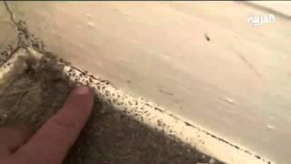 حشرة الفراش توجد في المناطق التي لا يتم تهويتها