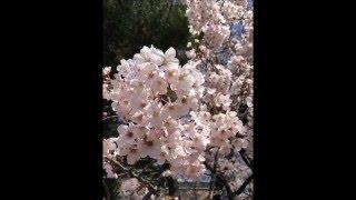 組曲第4番ニ短調 「春の日記」Op1より ~ リコーダー5重奏 (J.C. フィ...