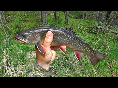 Wisconsin Trout Fishing - 5/7/2021