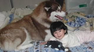 子供幼児とまったり和むハスキー犬アリス TEAM cookie!!! facebook http...