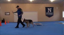 Nico (German Shepherd) Dog Training Boot Camp Video