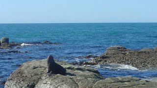 Kaikoura new zealand | New Zealand Travel Guide 2014