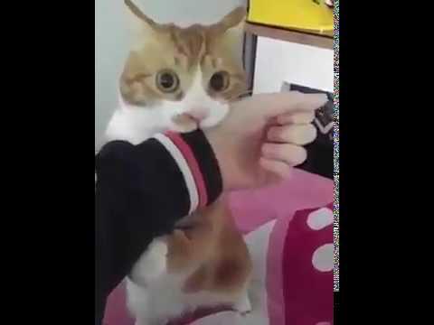 고양이가 사람 못물게 하는 법 소리주의!!