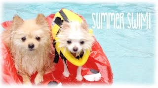 My Teacup Pomeranian Goes Swimming Vlog & Bark Box Opening