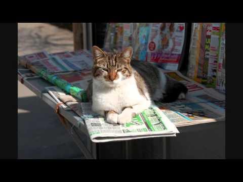 Virgilio Savona - Il giornale dei gatti (G. Rodari)