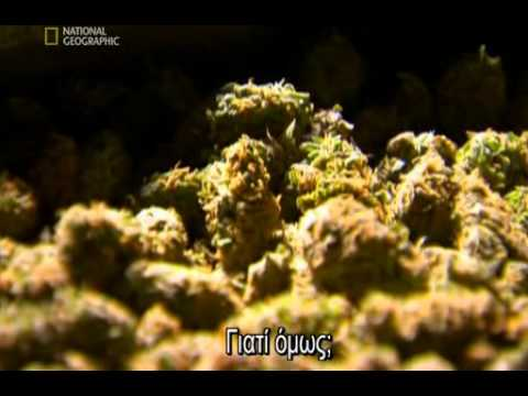 Inside Marijuana [gr].avi