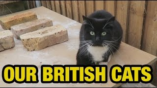 LONDON ep5 Our British Cats Ernest Ng Bro