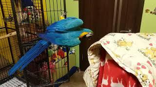 Попугай ара и ребенок играют