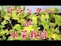 【タネから育てる家庭菜園】2016プランターで出来る水菜栽培日記1