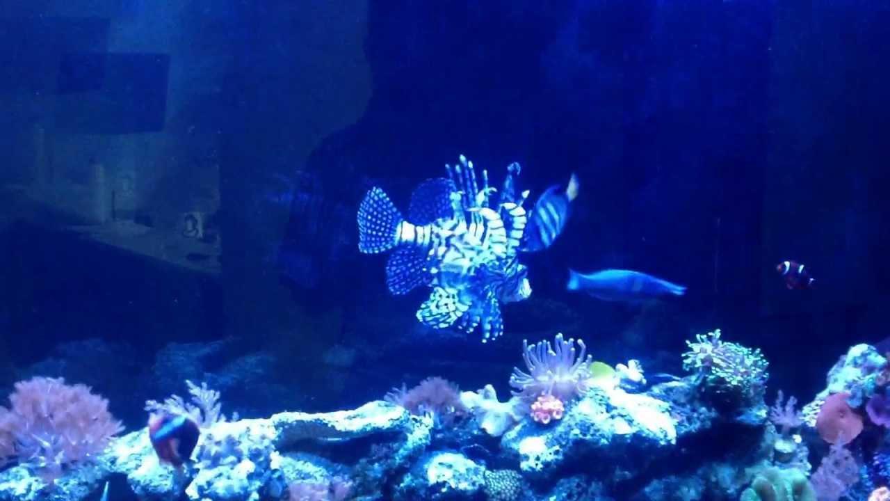Leon marino alimentado con peces en acuario marino youtube for Peces de acuario marino