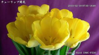 エンコしなおしました。 鉢植えの花の開く様子を撮影しました。