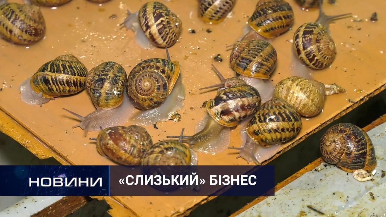 Новоушицький юнак експортує до ЄС равликів, котрих розводить сам. Перший Подільський 13.05.2021