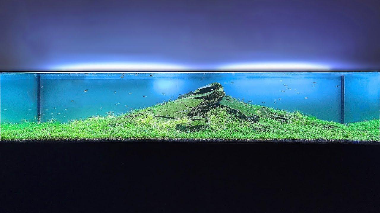 [VIDEO] Des Aquariums Incroyablement beau ! Maxresdefault