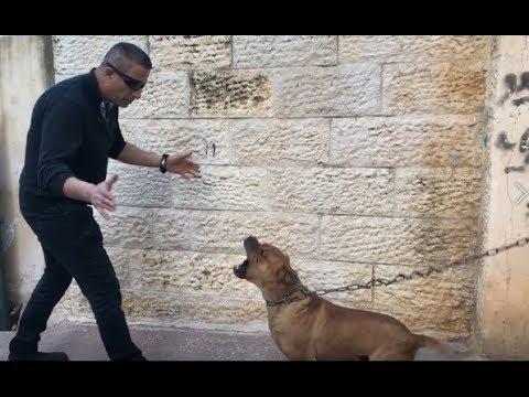 500 دولار مكافئه لمن يفك هذا الكلب من رقبته ومعك ٣٠ يوم تطعمه وتصادقه مع جمال العمواسي