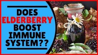 Does Elderberry Boost Immune System?? (Elderberry Health Benefits)