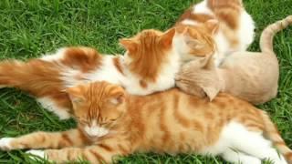 Клип с котиками (песня в описании)