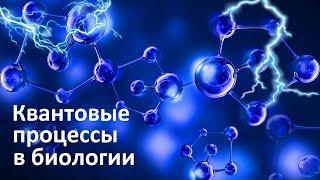 Квантовые процессы в биологии  Квантовый фотосинтез  Квантовые вибрации молекул