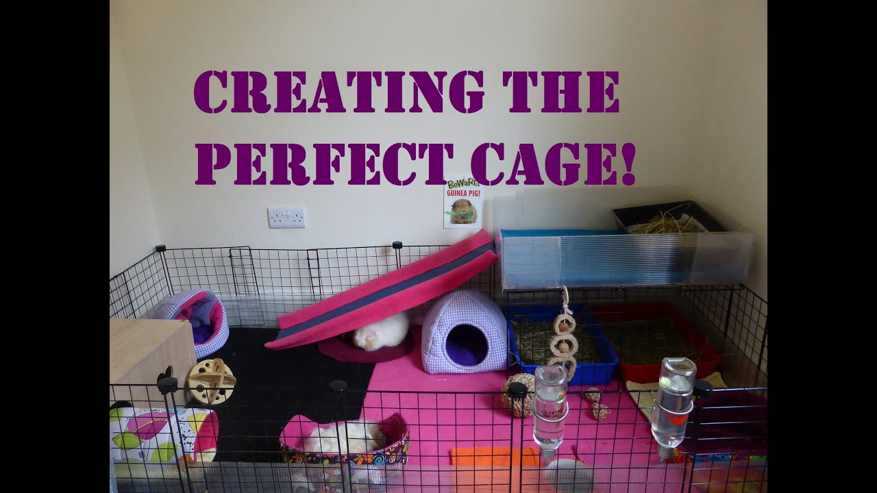 Your Guinea Pig S Home 5 Top Tips For The Perfect Cage