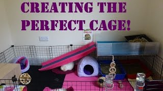 Your Guinea Pig's Home: 5 Top Tips for the Perfect Cage!