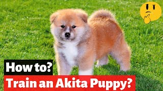 How To Train an Akita Puppy? | EASY and FAST Training Method |