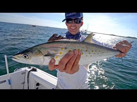 Epic Spanish Mackerel Fishing with some Shark Action!