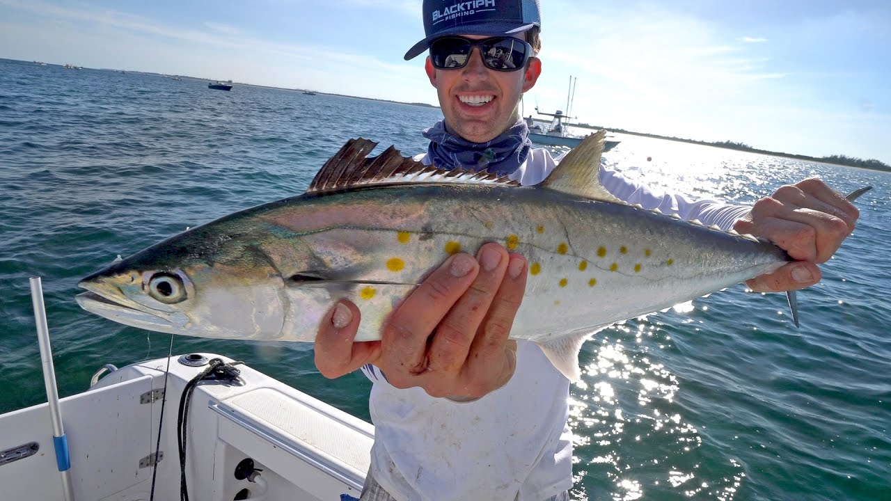 Epic spanish mackerel fishing with some shark action for Spanish mackerel fish