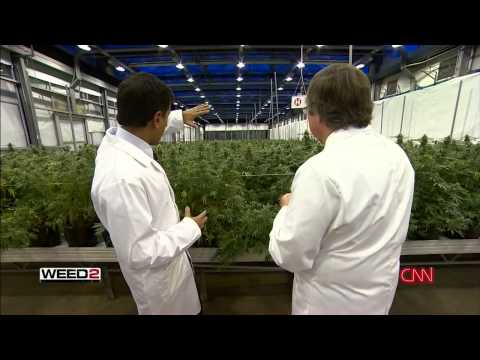 WEED 2 - Investigative Report - Dr Sanjay Gupta Reports CNN (full length documentary) HD
