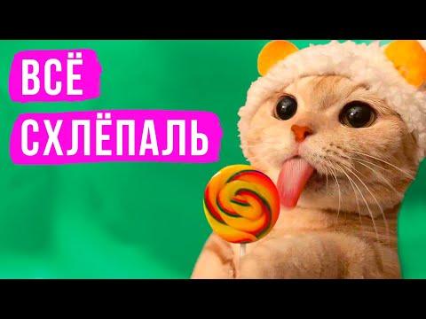 Как котик всё слопал) Приколы с котами   Мемозг #392
