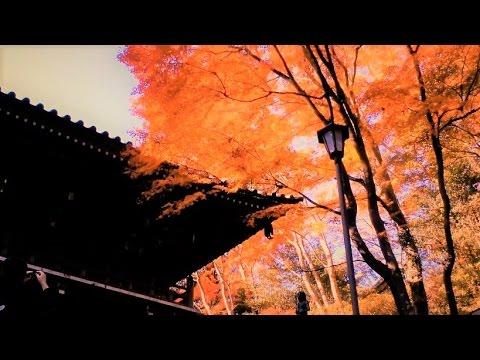 東京・高尾山の紅葉が一番の見ごろだよ。