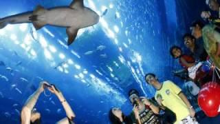 Le plus grand aquarium du monde a Dubai (1)(Le plus grand aquarium du monde a Dubai des images prises a l'interieur., 2010-03-06T22:30:40.000Z)