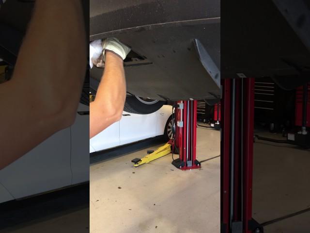 Un mecánico rescata a un gato atrapado en el interior del parachoques trasero de un Tesla