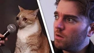 Shane vs Cat