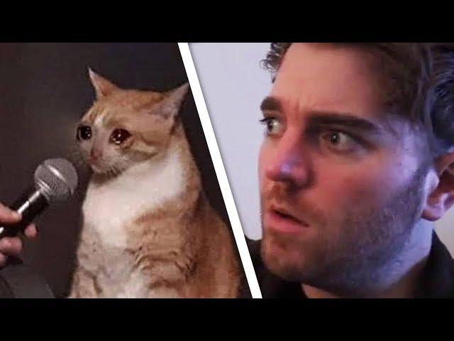 Shane vs Cat