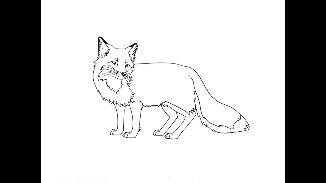 Как нарисовать волка маленького