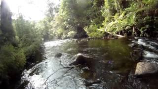 Freshwater Forage - Jan 2015