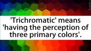 Explanation of the Trichromatic Theory of Color Vision