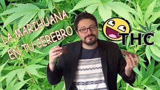 Efectos de la marihuana en tu cabeza