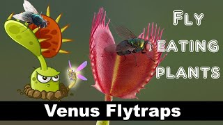 Fun videos for kids || Venus flytraps || Carnivorous Plant Facts for Kids ||