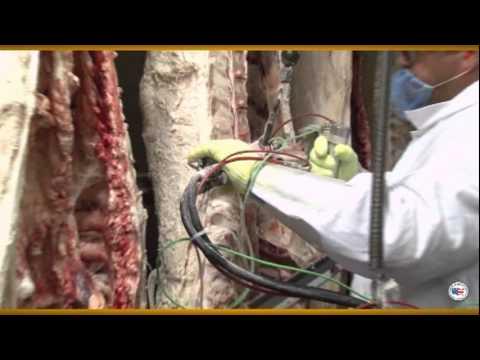 U.S. Beef Grading