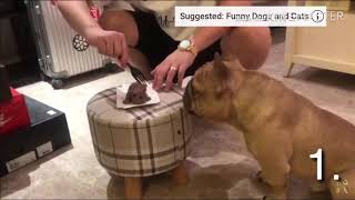 Top 10  Funny Dog reaction on cutting dog cake  prank on dogs  