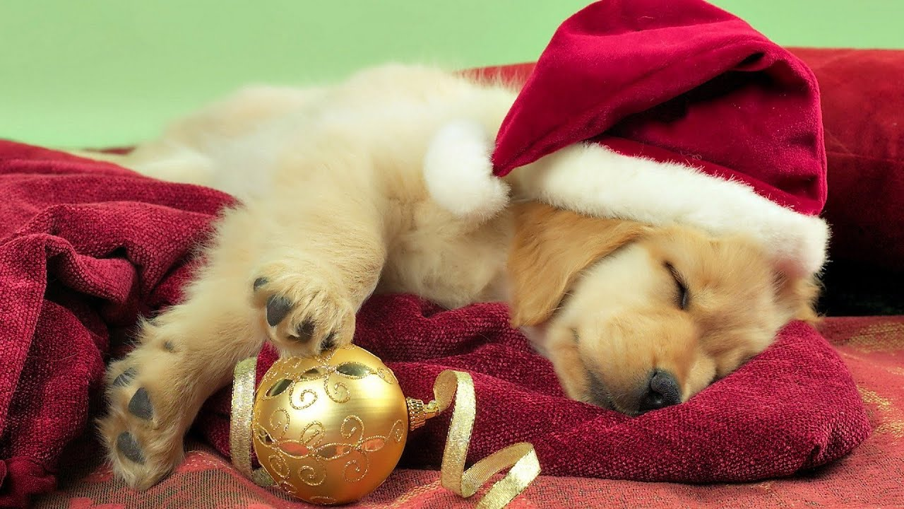 Kids Getting a Puppy For Christmas! - YouTube