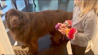 Dog Is Jealous Of Little Girl's New Pet