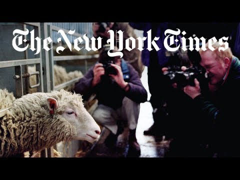 The Story of Dolly the Cloned Sheep | Retro Report | The New York Times