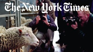 the story of dolly the cloned sheep   retro report   the new york times