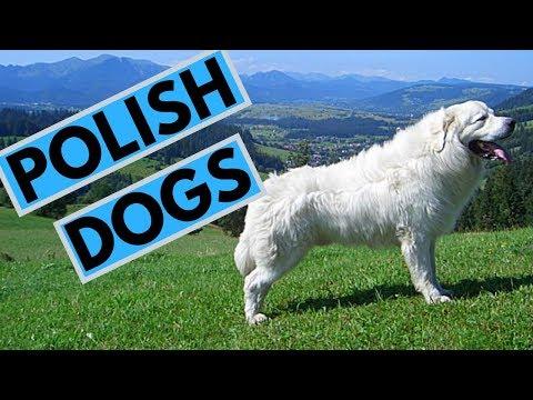TOP 5 Polish Dog Breeds