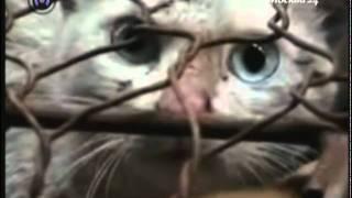 Шубы из котов (ВВЦ)