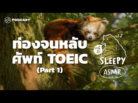 ASMR   ท่องจนหลับ ศัพท์ TOEIC   Part 1 (Jungle Rain V.)   คำนี้ดี SLEEPY EP.24