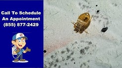Salem Bed Bug Removal | Salem Bed Bug Exterminator | Bed Bug Pest Control