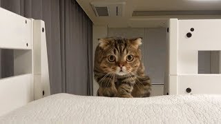 I gave my bunk bed as a present to the cats. (ENG SUB)