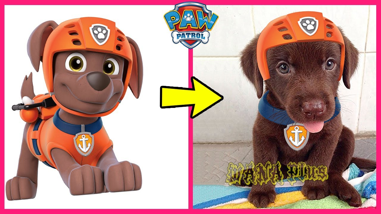 Download Paw Patrol Characters In Real Life 2021 👉@WANA Plus